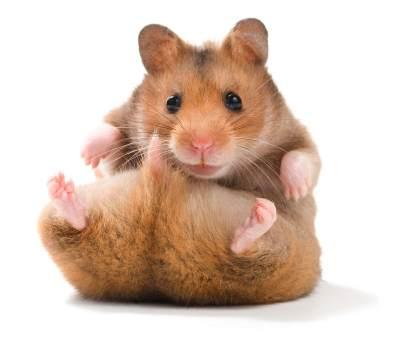 4. Hamster