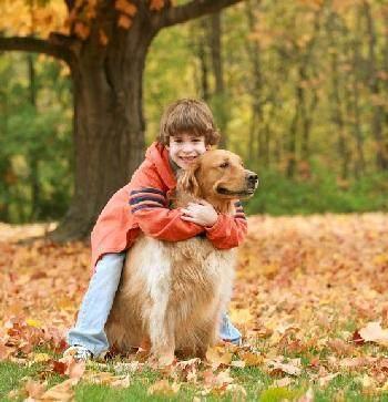 2. Anjing