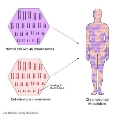 Mosaicisme