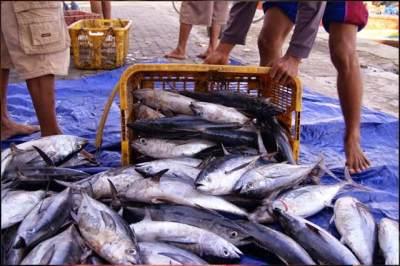 Hindari Makanan Laut yang Tinggi Merkuri