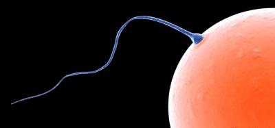 1. Gangguan Ovulasi
