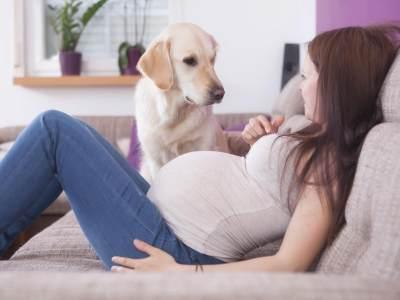 Siapa Bilang Ibu Hamil Tidak Boleh Memelihara Hewan? Ini Tips Aman Memelihara Hewan Peliharaan Saat Hamil!