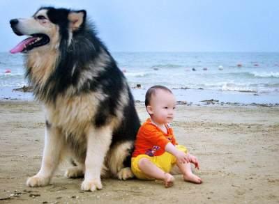 Ciri-Ciri Infeksi Setelah Digigit Anjing