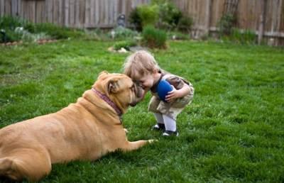 Apakah Gigitan Anjing Bisa Sebabkan Tetanus dan Rabies?