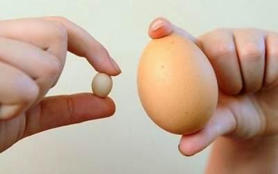 Payudara Lebih Besar dan Kencang Berkat Masker Putih Telur Ini!