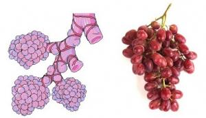 Anggur dan Alveoli Paru-Paru