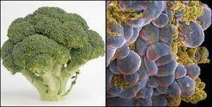 Brokoli dan Kanker