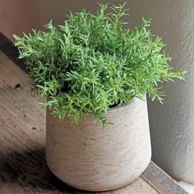 Moms, Jenis-jenis Tanaman Herbal Ini Bisa Ditanam Sendiri di Dalam Pot, Coba Yuk!