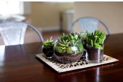Terrarium, Taman Mini Sumber Kebahagiaan dan Konsentrasi di Rumah