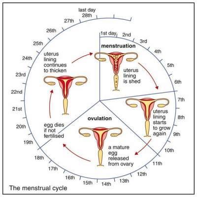 Normalkah Siklus Menstruasi Mommy ? Yuk Cari Tahu Lewat Tulisan Ini