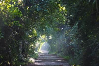 Siapkan Long Weekend, Yuk Main ke Wisata Taman Nasional Baluran