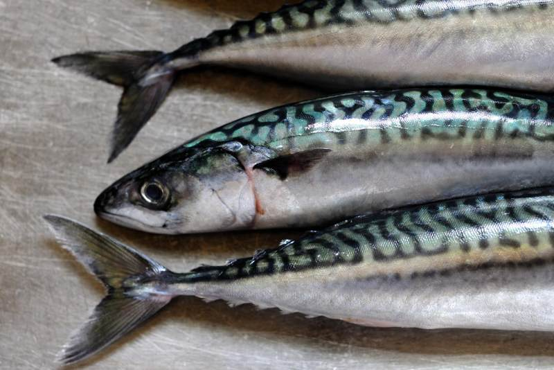 Yuk Coba Resep Olahan Ikan Tengiri Untuk Makan Si Kecil Moms
