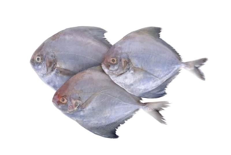 10 Manfaat Ikan Bawal Baik Untuk Kesehatan Keluarga Nih Moms