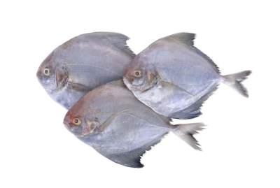 10 Manfaat Ikan Bawal, Baik untuk Kesehatan Keluarga Nih Moms
