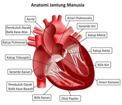 Apa Saja Penyebab Jantung Bocor pada Bayi?