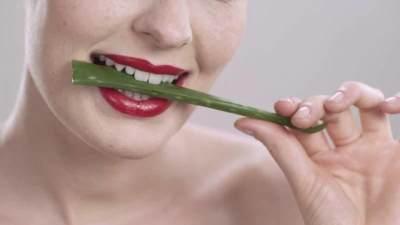 Manfaat Lidah Buaya untuk Kecantikan dan Kesehatan