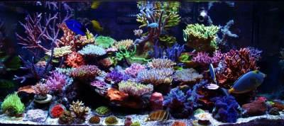 Kenalan Yuk dengan Jenis-jenis Ikan Hias Aquascape Air Tawar