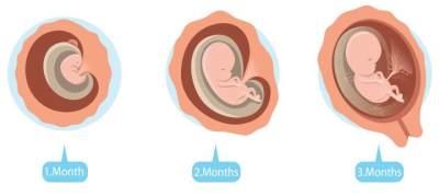 Moms, Intip Tahap Perkembangan Janin 3 Bulan dalam Kandungan