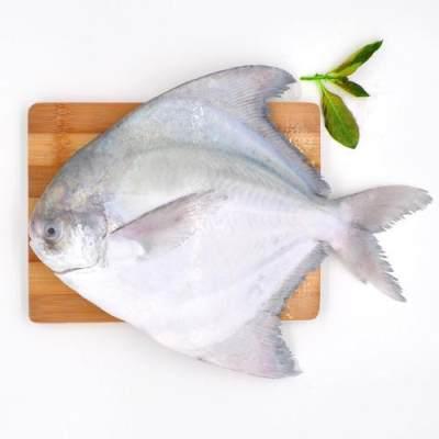 Ikan bawal putih untuk bayi