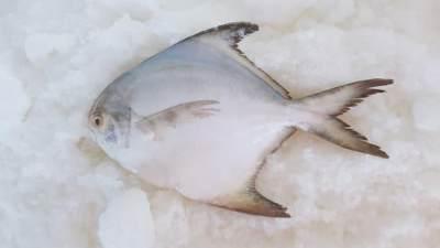 Ikan Bawal untuk Konsumsi Ibu Hamil, Ini Dia Ragam Manfaatnya Moms