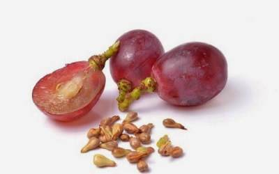 Kandungan Nutrisi Buah Anggur Merah