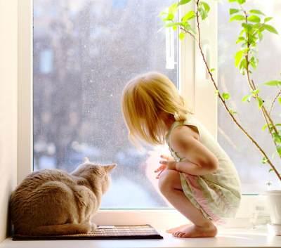 Cara Membasmi Kutu Kucing