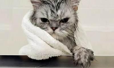 Yuk Ketahui Cara Menghilangkan Kutu Kucing Secara Alami