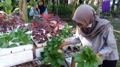 Budidaya Bayam Merah dengan Cara Hidroponik, Solusi Berkebun di Lahan Sempit