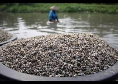 Nutrisi dari Makanan Laut Kupang