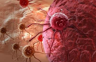 Manfaat Daun Kelor untuk Kanker dan Tumor