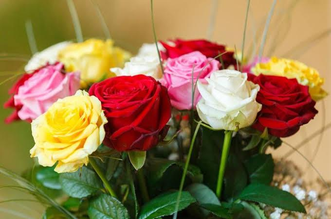 Menarik Inilah 4 Jenis Bunga Mawar Makna Dibalik Warnanya