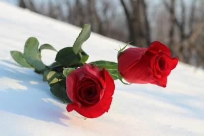 Menarik, Inilah 4 Jenis Bunga Mawar & Makna Dibalik Warnanya!