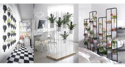Tips Menghias Ruangan dengan Tanaman Agar Rumah Tampak Asri dan Sejuk