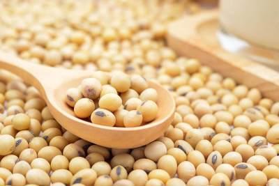 4. Kacang Kedelai