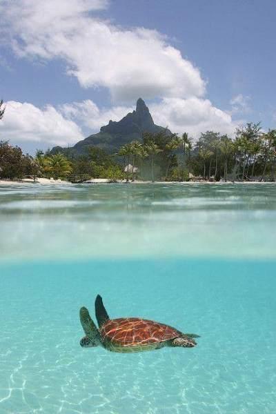Fakta Tentang Bora-bora French Polynesia, Destinasi Honeymoon Syahrini dan Reino Barack