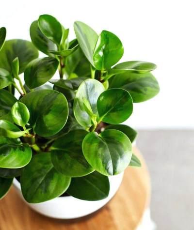 Ciptakan Udara Sehat di dalam Rumah dengan 5 Rekomendasi Tanaman Hias Ini