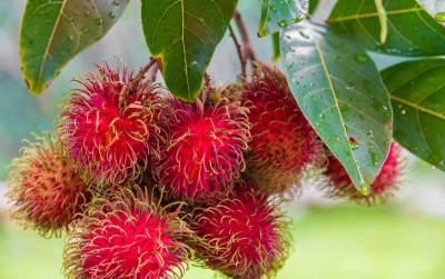 Kaya Antioksidan, Ini Dia Manfaat Rambutan Bagi Kesehatan