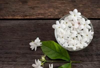 Perbaiki Mood dengan 4 Rekomendasi Aroma Parfum Ini, Segar dan Menenangkan!