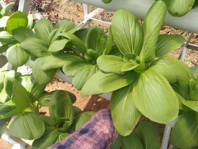 5 Kelebihan Bertanam Metode Hidroponik Dibanding Tanam Biasa