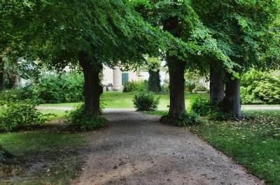 Rekomendasi 3 Jenis Pohon Peneduh yang Cocok Ditanam Di Pekarangan Rumah