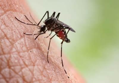Cara Mengobati Sengatan atau Gigitan Serangga Pada Anak Secara Tepat