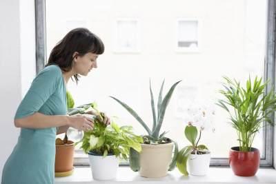 Cara Merawat Tanaman Di Dalam Rumah Agar Tidak Layu, Perhatikan 4 Hal Ini