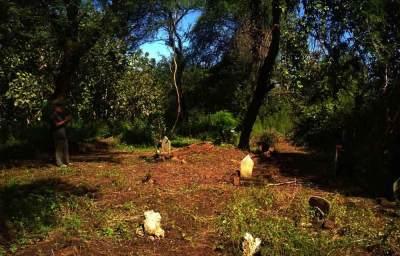 3 Hutan di Banyuwangi & Bondowoso yang Dikaitkan dengan Kisah Horor Viral 'KKN di Desa Penari'