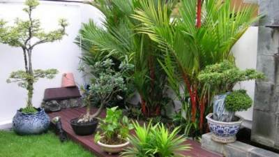 2. Taman minimalis di halaman rumah