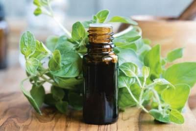 8 Manfaat Minyak Oregano Untuk Kesehatan, Lancarkan Haid Hingga Pencernaan