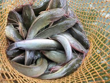 Kondisi Ikan