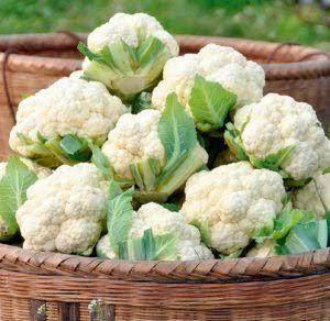 Kandungan Brokoli Putih