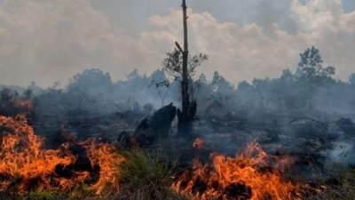 Melawan Asap Kebakaran Hutan, Awkarin Buka Donasi dan Siap Terbang Ke Kalimantan