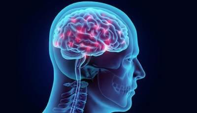 Bermanfaat Bagi Kesehatan Otak