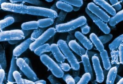 Menghambat Pertumbuhan Bakteri